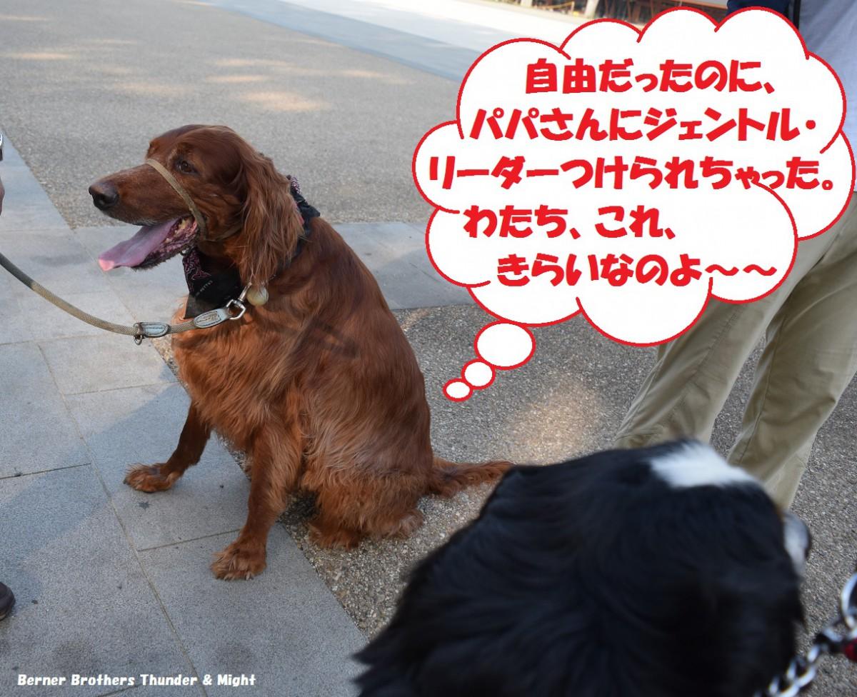 DSC_0561(2)