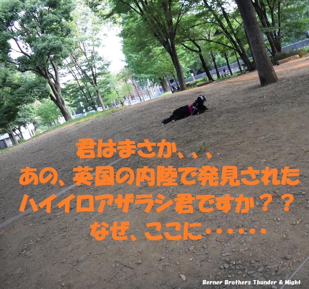 DSC_2088(2)